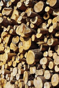 Free Wood Royalty Free Stock Images - 15555039