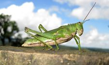 Free Green Grasshopper With Clouds Stock Photo - 15555400