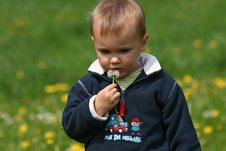 Boy And Dandelion Royalty Free Stock Photos