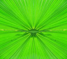 Free Green Palm Leaf Royalty Free Stock Image - 15557326