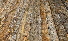 Free Pine Bark Stock Photo - 15557480
