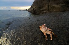 Free Crab On Rock Royalty Free Stock Images - 15558829