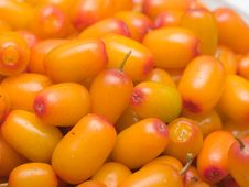 Free Sea Buckthorn Stock Photography - 15559532