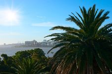 Free Tropical Palm Coast Near Montevideo Town. Stock Photography - 15559562