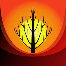 Free Tree At Sunrise Royalty Free Stock Photos - 15559618