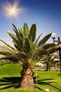 Free Big Green  Palm. Royalty Free Stock Photos - 15561828