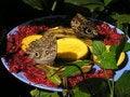 Free Butterflies Eating Fruits Stock Photos - 15567373