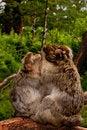 Free Monkey Family Stock Images - 15567644