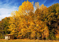 Free Forest Autumn Stock Images - 15569004