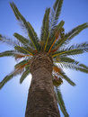 Free Looking Up At Palmtree Stock Image - 15569751