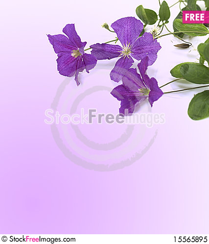 Free Violet Flowers Royalty Free Stock Photo - 15565895