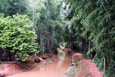 Free Burmese Nature Stock Image - 15560281