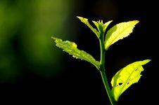 Free Leaf Stock Photos - 15560843