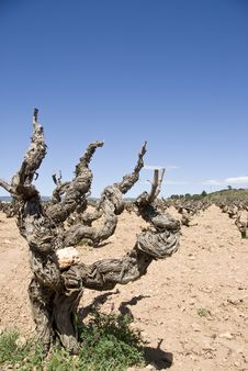 Free Old Vine Plant Stock Photos - 15561173