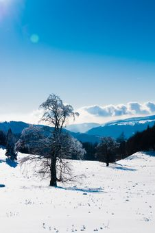 Free Trees Covered With Snow In Winter, In Mountains Royalty Free Stock Photography - 15564157
