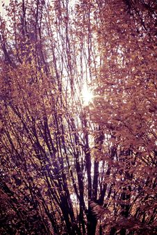 Free Sunset Tree Stock Photos - 15564813