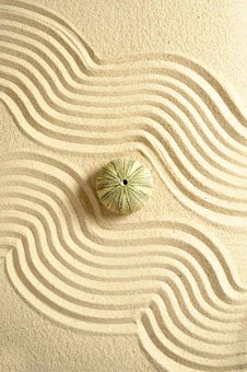 Free Urchin In Sand Stock Photos - 15565383
