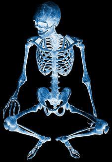 Free Skeleton Seated Xray Royalty Free Stock Photos - 15565468