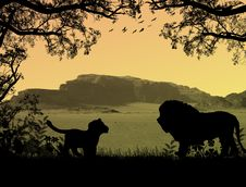 Free Lions On Beautiful Sunset Royalty Free Stock Photos - 15565998