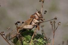 Free Locust Husk Stock Photo - 15566100