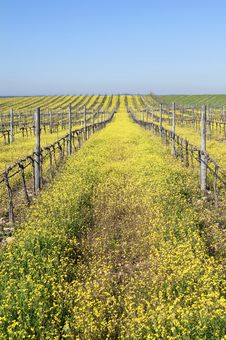 Vineyards With Flowers Stock Photography