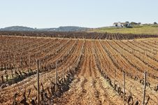 Free Vineyards In Winter Stock Photos - 15566613