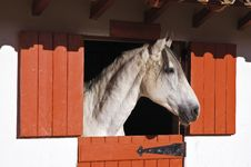 Free White Horse Royalty Free Stock Photography - 15566617
