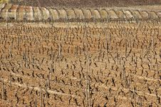 Free Vineyards In Winter Royalty Free Stock Images - 15566659