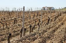 Free Vineyards In Winter Royalty Free Stock Images - 15566689