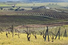 Free Vineyards In Winter Royalty Free Stock Photos - 15566808