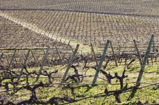 Free Vineyards In Winter Stock Photography - 15566932