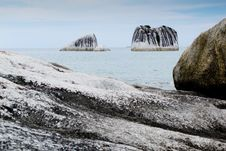 Free Exotic Pig Island At Belitung Indonesia Royalty Free Stock Photography - 15567107