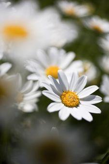 Free Garden Stock Photo - 15568080