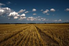 Free Field And Hay Balls Under Sky Stock Photography - 15568082