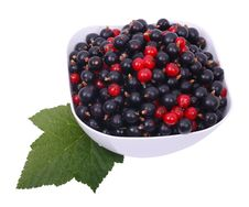 Free Currant Black And Red Stock Image - 15568381
