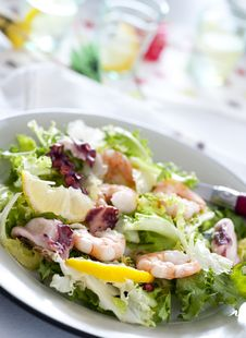 Free Salad Stock Photo - 15568580