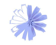 Unfinished Drawing Flower Closeup Royalty Free Stock Photos