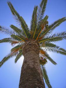 Free Looking Up At Palmtree Stock Image - 15569751