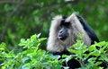 Free Black& White Monkey Royalty Free Stock Images - 15578449