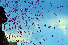 Free Paper Planes Stock Images - 15570004