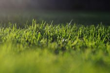 Free Grass Royalty Free Stock Photo - 15572125