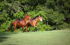 Free Two Horses Running On Hill Stock Photo - 15572360
