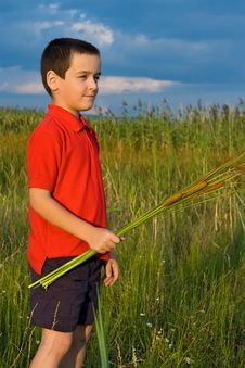 Free Boy Holding Reeds Stock Photos - 15572493