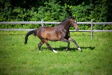 Free Bay Horse Cantering Up Hill Royalty Free Stock Images - 15572739