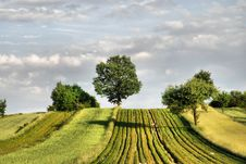Free Agricultural Landscape Royalty Free Stock Photos - 15576718