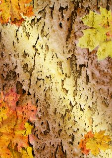 Free Red Sheets Maple On Canvas Royalty Free Stock Photos - 15578008