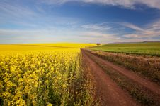 Canola Road Farm Stock Photos