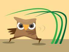 Free Karateka Owl Perform Sport Exercises Stock Images - 15580954