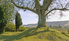 Free Big Tree On A Small Hill. Royalty Free Stock Images - 15581309