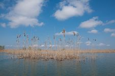 Free Reed Stock Photography - 15581782